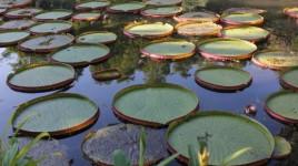 botanical gardens rio de janeiro jardim botanico